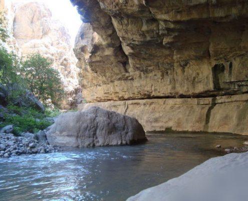 دره شارک